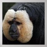 White Faced Saki Monkey Poster