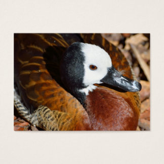 White Faced Whistling Ducks Business Card