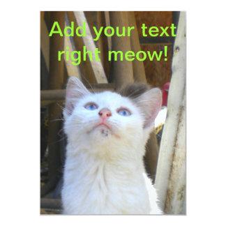 White Farm Cat Blue Eyes Card