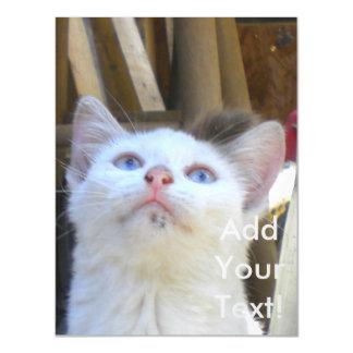 White Farm Cat Blue Eyes Magnetic Card