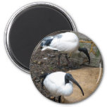White Feathers Refrigerator Magnet