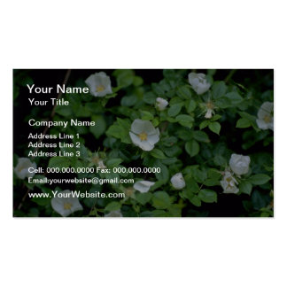 white Field rose flowers Business Card Template