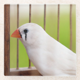 White Finch Bird in Cage Glass Coaster