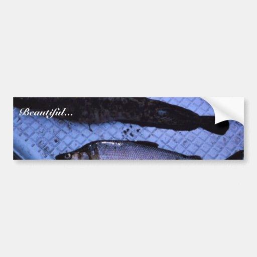 White Fish Humpback Car Bumper Sticker