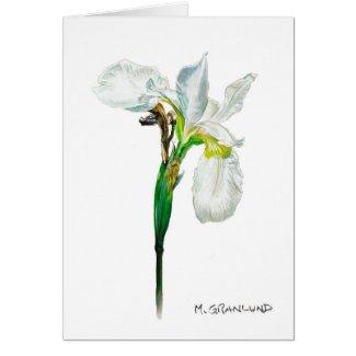 White Flag Iris Greeting Card