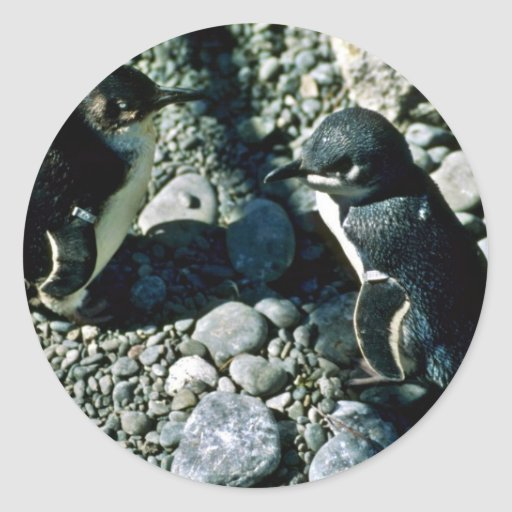 White-flippered Penguins Round Stickers