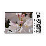 White Floral Flower stamps Pink Rhodies postage