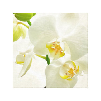 White Floral Orchid Flowers Wrapped Canvas Canvas Print