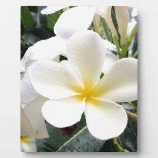 White Floral Plaque