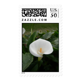 White Floral Postage Stamp