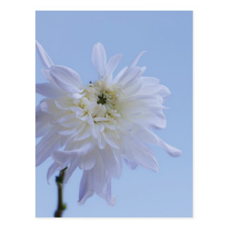 White Flower against Blue Sky Postcard