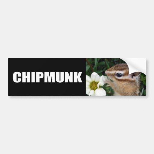 White flower and Chipmunk (4) Bumper Stickers
