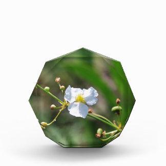 white flower award