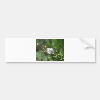 white flower bumper sticker