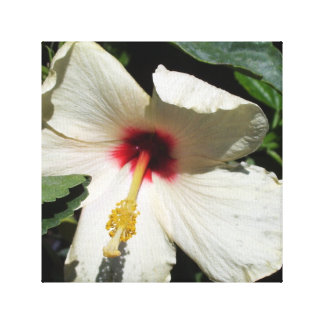 White flower canvas