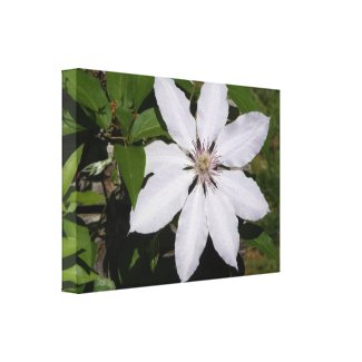 White Flower wrappedcanvas
