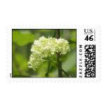 White Flower Cluster - Stamp
