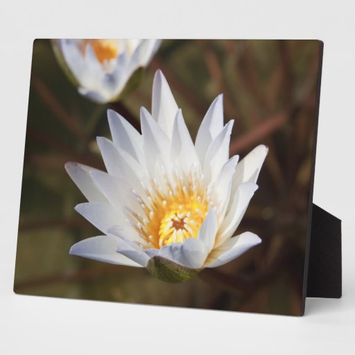 White Flower Display Plaques