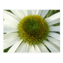 White Flower DIY Postcard