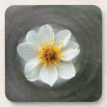 White Flower Dream; No Text Drink Coasters