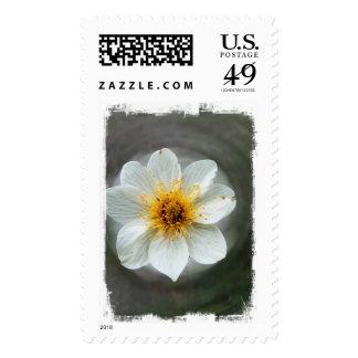 White Flower Dream; No Text Postage