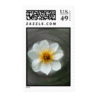 White Flower Dream; No Text Postage Stamps