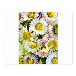 White Flower Floral Nursery Peace Cute Superb nice Postcard