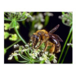 white Flower Fly flowers Postcards