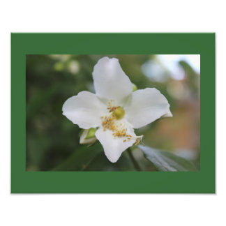 White Flower in Bloom Photo Print