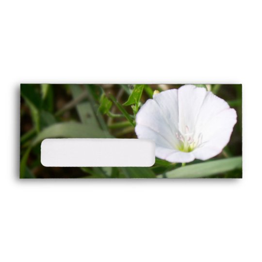White Flower in the Grass Envelope