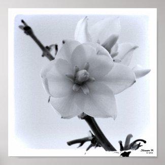 White Flower in the Sky Poster print