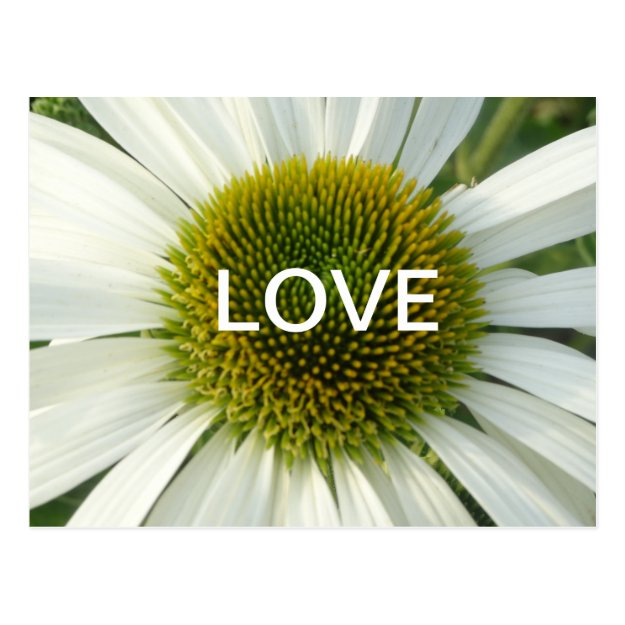 White Flower LOVE Cust. Postcard