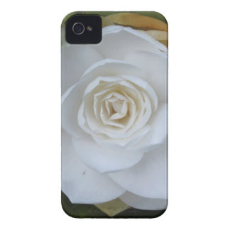 White flower of Camellia in spring Case-Mate iPhone 4 Case