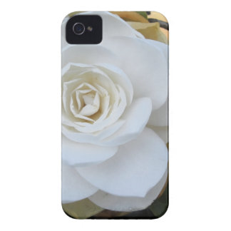 White flower of Camellia in spring iPhone 4 Case