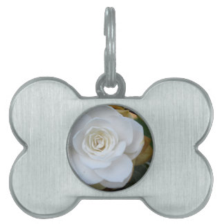 White flower of Camellia in spring Pet ID Tag