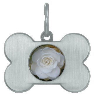 White flower of Camellia in spring Pet Name Tag