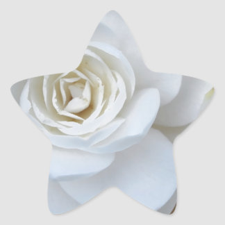 White flower of Camellia in spring Star Sticker
