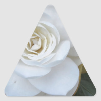 White flower of Camellia in spring Triangle Sticker
