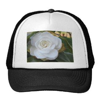 White flower of Camellia in spring Trucker Hat