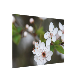White Flower pic Stretched Canvas Prints