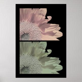 White Flower Pink Flower Poster Print