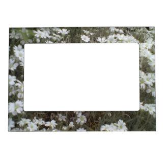 White flower Plant Frame Magnet
