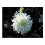 White Flower Post Card