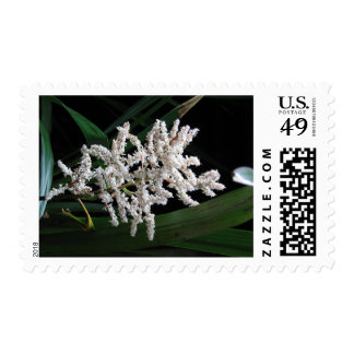 White Flower - Stamp