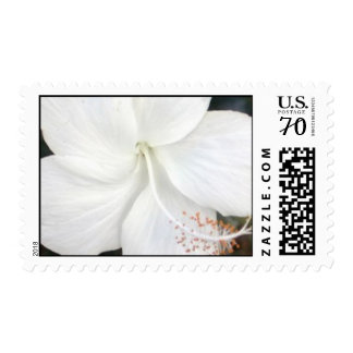 white flower stamps