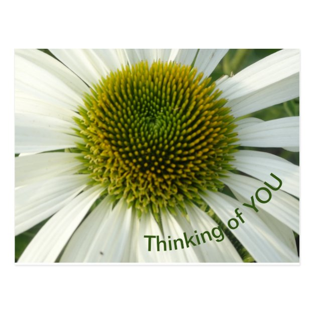 White Flower Thinking of YOU Postcard