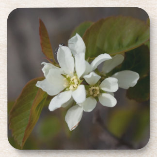 White Flower with Ant Coaster
