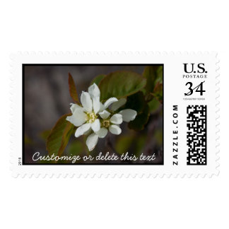 White Flower with Ant; Customizable Stamp