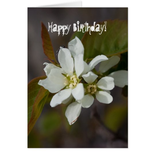 White Flower with Ant; Happy Birthday Card