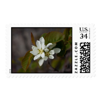White Flower with Ant Postage Stamp